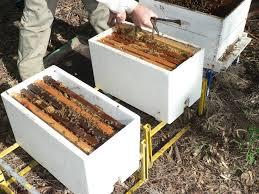 Compra de colmenas de abejas