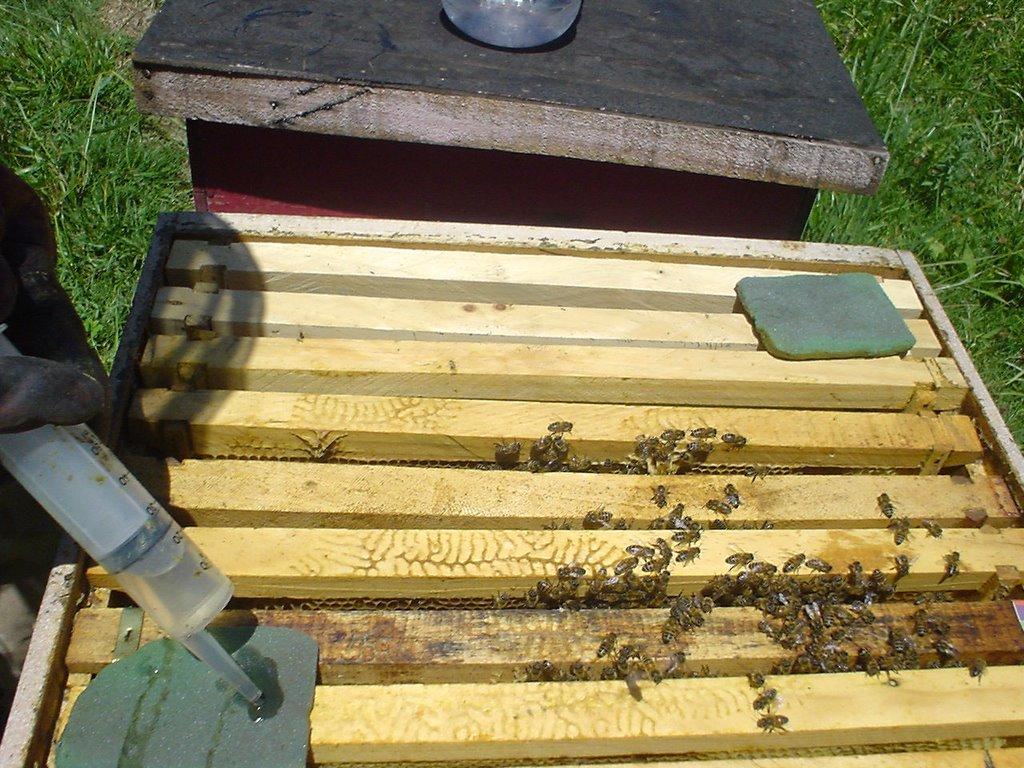 Cómo combatir la varroa en las colmenas de abejas