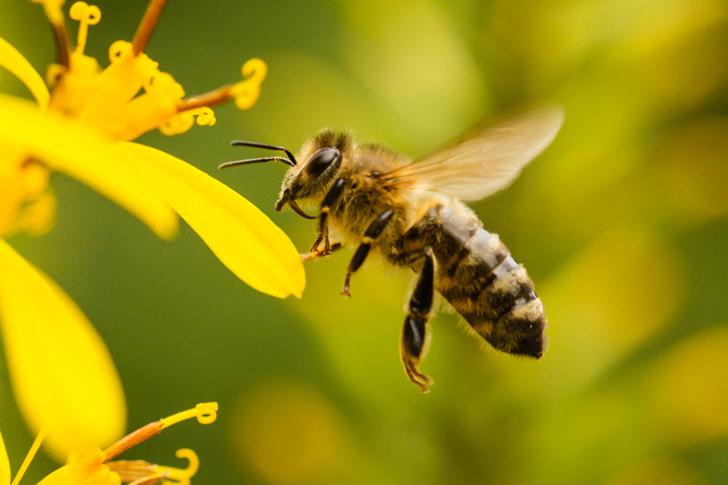 El vuelo de las abejas