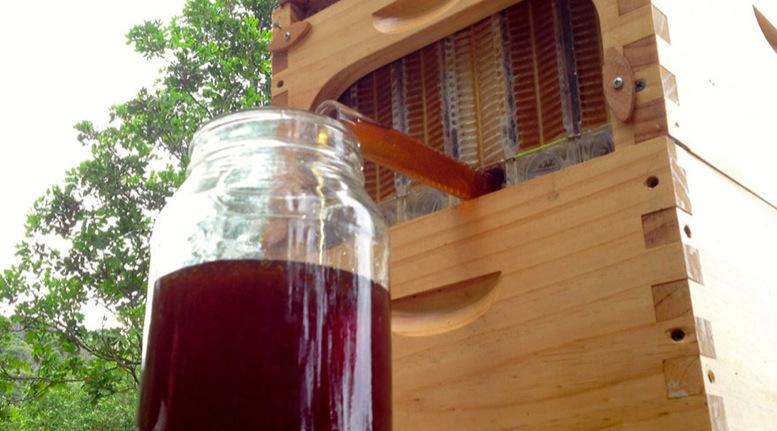 Cómo hacer miel de abejas artificial